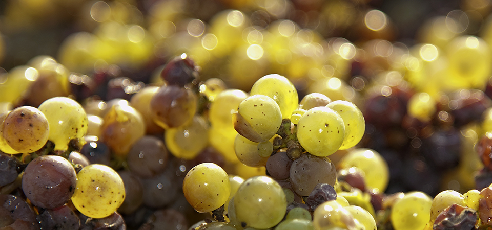 Ress_modne druer
