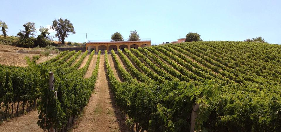La Staffa Fields and winery
