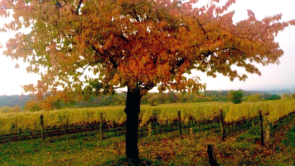 schrocks-fields-fall-1